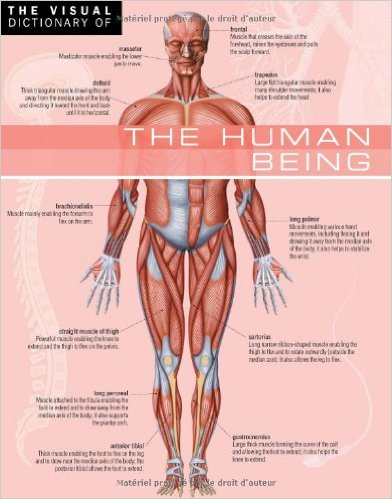 The Visual Dictionary of The Human Being : The Human Being (French Edition)